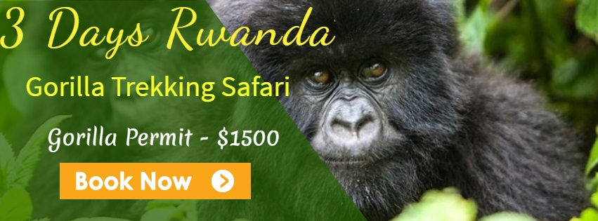 budget gorilla safari