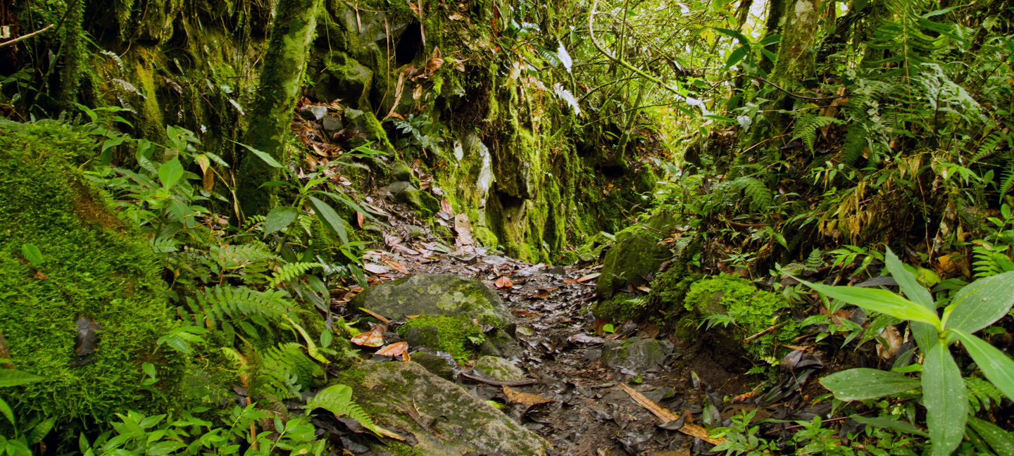 nyungwe forest national park nature walks