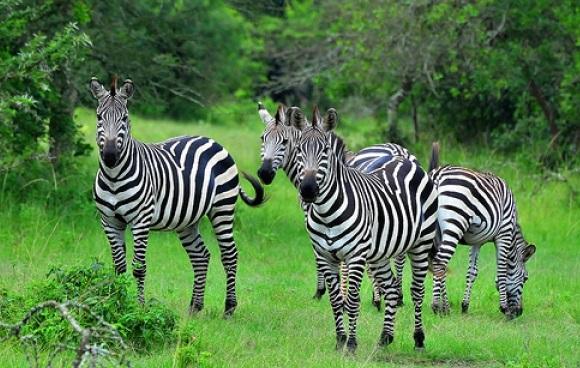 2 DAYS LAKE MBURO NATIONAL PARK SAFARI