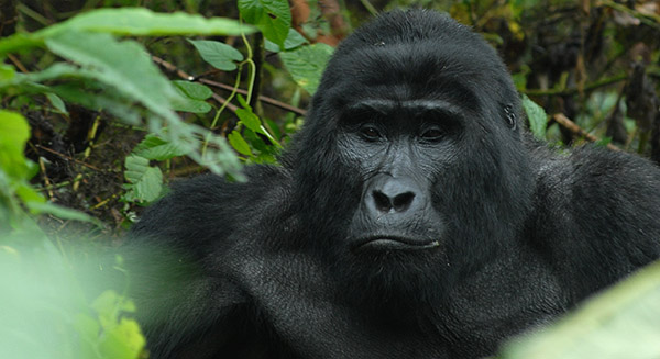 4 Days Rwanda Primate safari