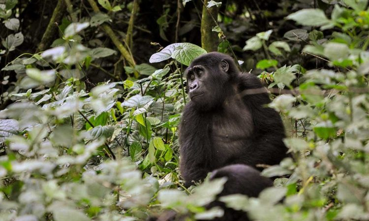 Activities in Virunga National Park