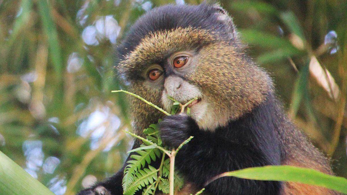 Activities on a Rwanda Safari