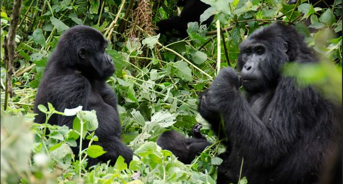How To Get To Bwindi Impenetrable National Park
