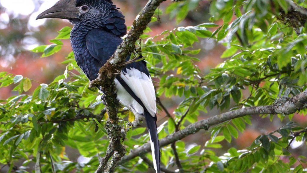 birding in Nyungwe forest national park
