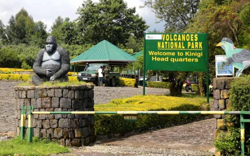 Safety of a Rwanda Safari