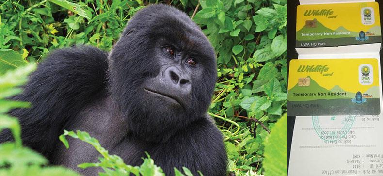 Gorilla Trekking in Permit Uganda