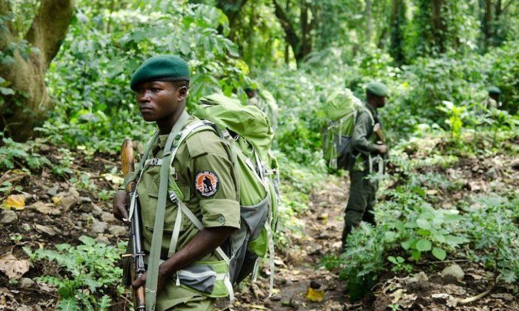 Safety of Gorilla Trekking in Virunga National Park