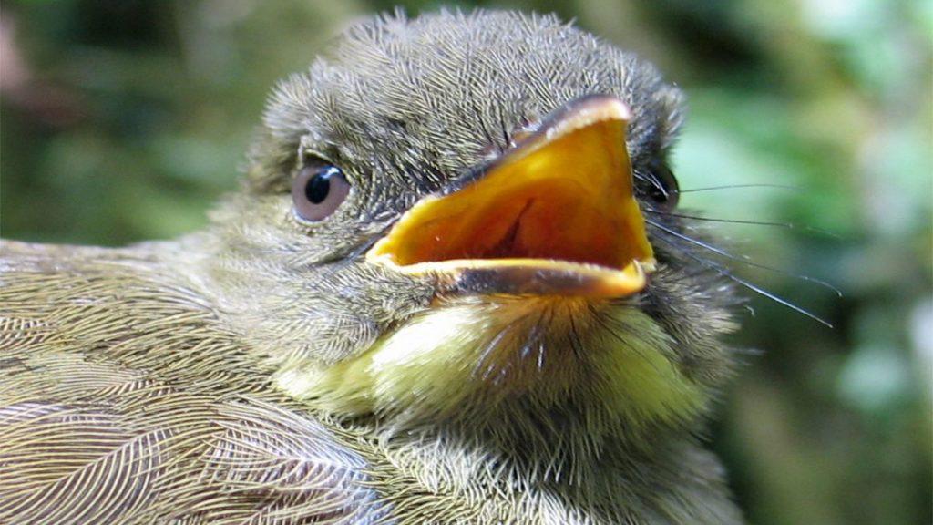 birding in kahuzi biega national park