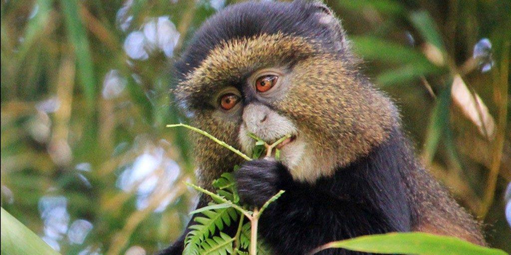 Activities in Mgahinga National Park