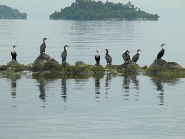 lake kivu national park