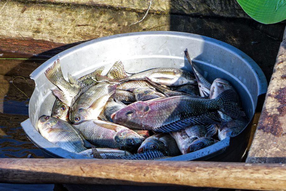 lake kivu  fishing