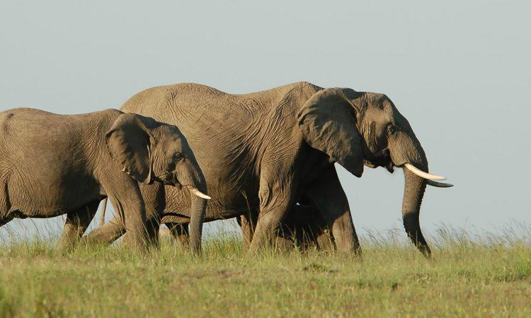 5 days Nyungwe and Akagera National Park safari