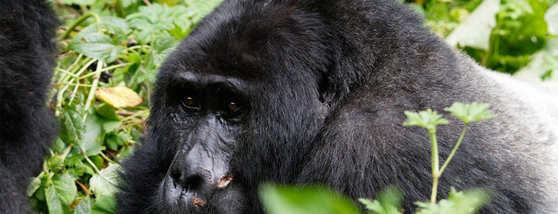 6 Days Uganda Primate Safari from Kigali