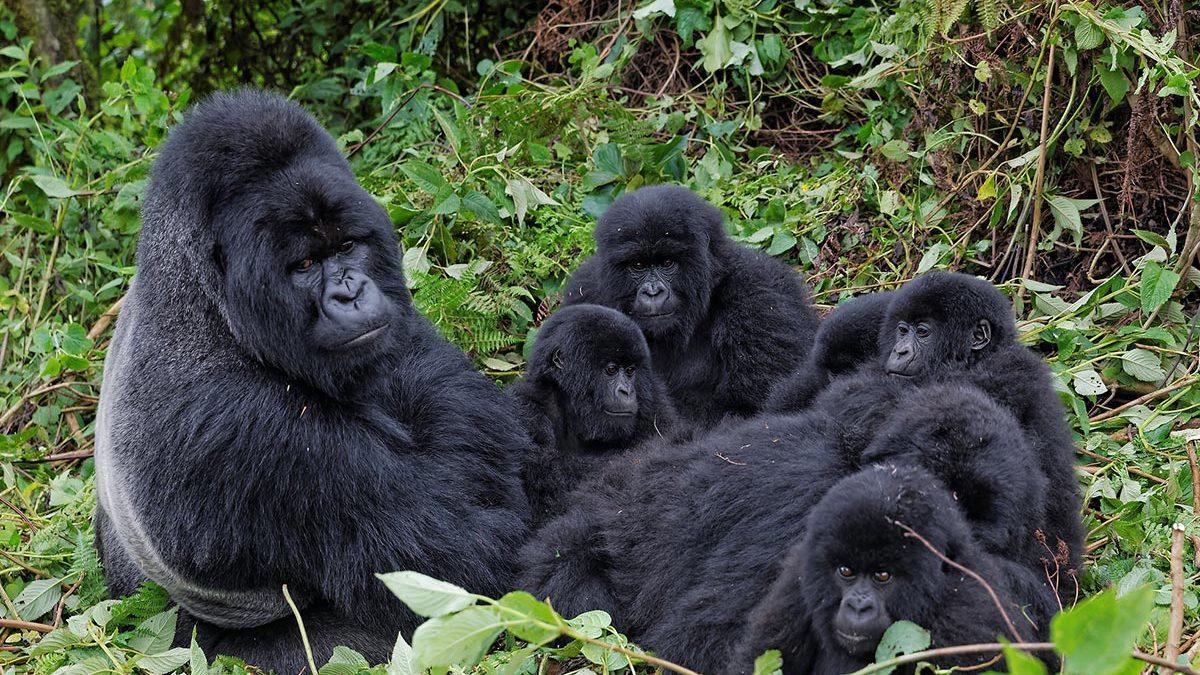 8 Days Uganda Rwanda Wildlife Safari