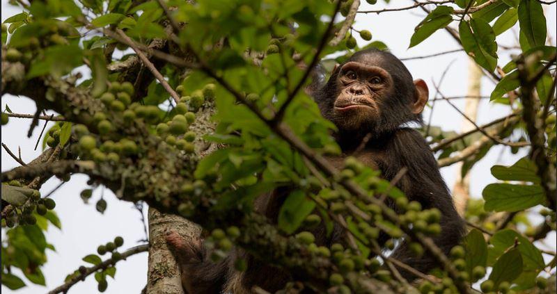 11 Days Uganda and Rwanda safari