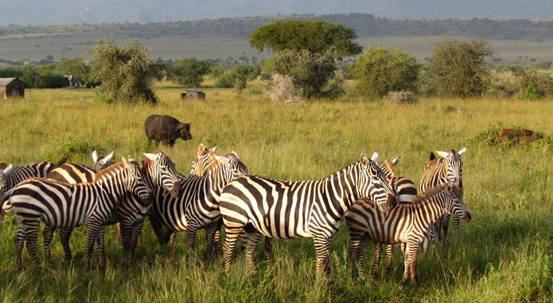 2 Days Lake Mburo Wildlife Safari