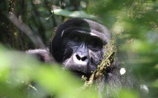 5 Days Rwanda Gorilla trekking and Lake Kivu Safari