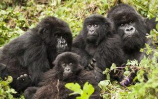 7 Days of Best of Rwanda safari