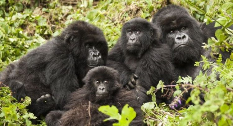 14 Days Rwanda Classic Safari