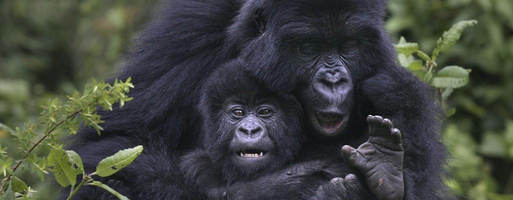 10 Days Best Rwanda Safari