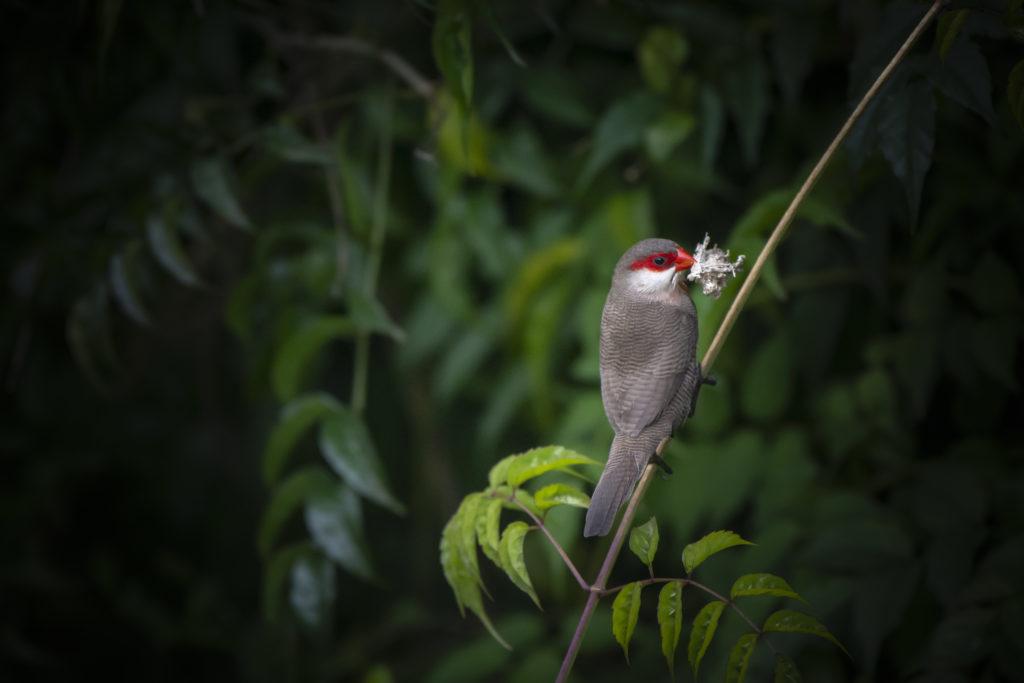 birds of in dian fossey hike