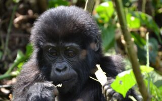 4 Days Gorilla Trekking & Mount Bisoke Hike