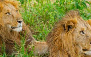4 Days Uganda Big 5 & Gorilla Trekking Safari