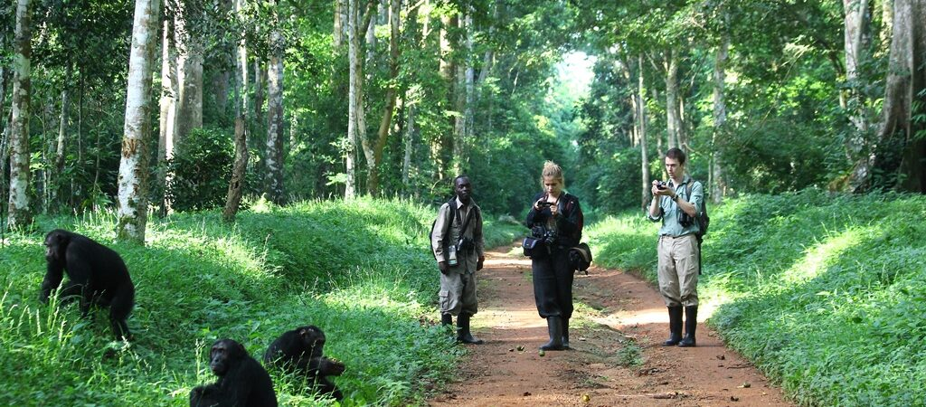 Activities in Budongo Forest