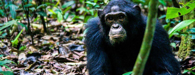 Activities in Kibale National Park