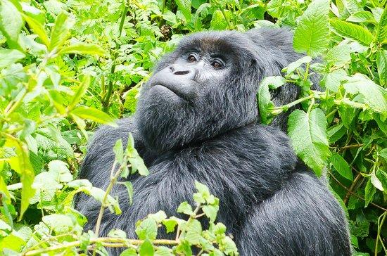 Activities in Mgahinga Gorilla National Park