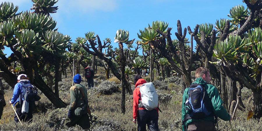 Activities in Mount Elgon National Park