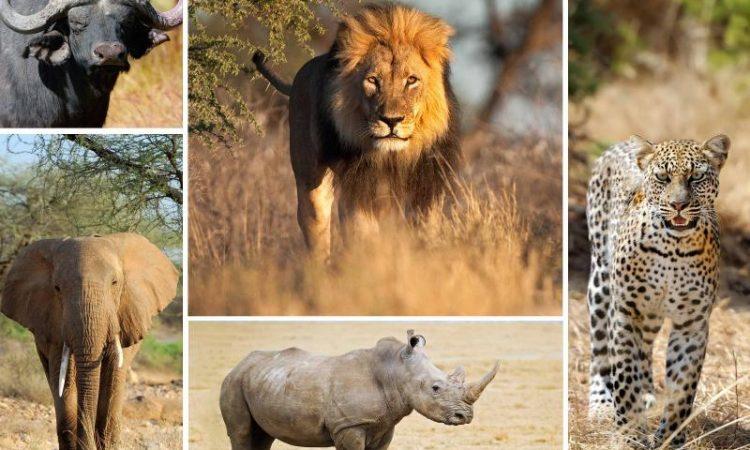 Big 5 Animals in Uganda
