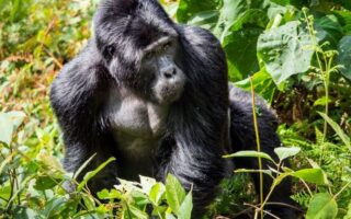 10 Days Uganda Rwanda Safari Tour