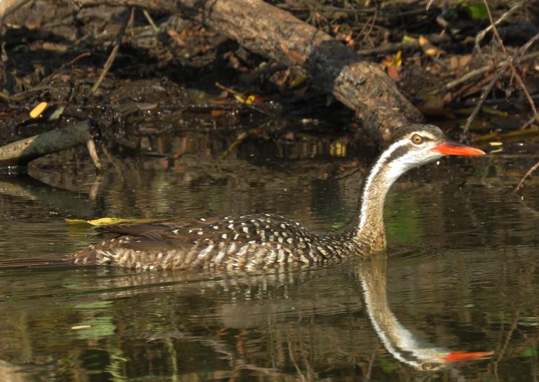 lake mburo birds