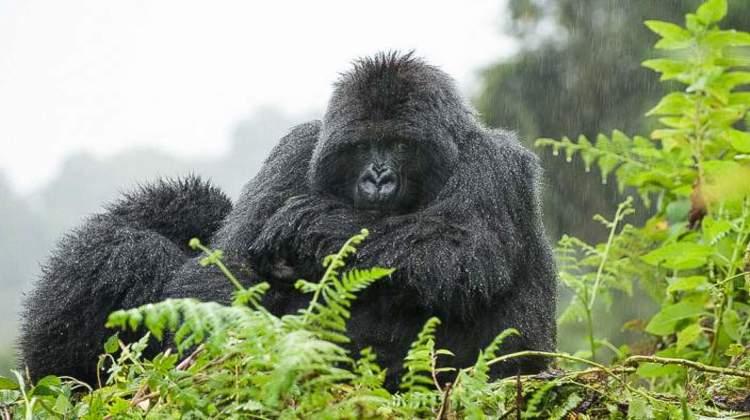 5 Days Bwindi Gorillas & Murchison falls Safari